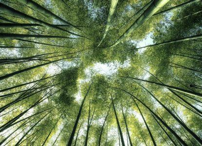 Interfaith Initiatives to Achieve the Agenda 2030 Environmental Goals